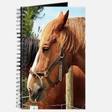 Two farm draft horses Journal