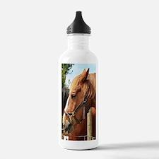 Two farm draft horses Water Bottle