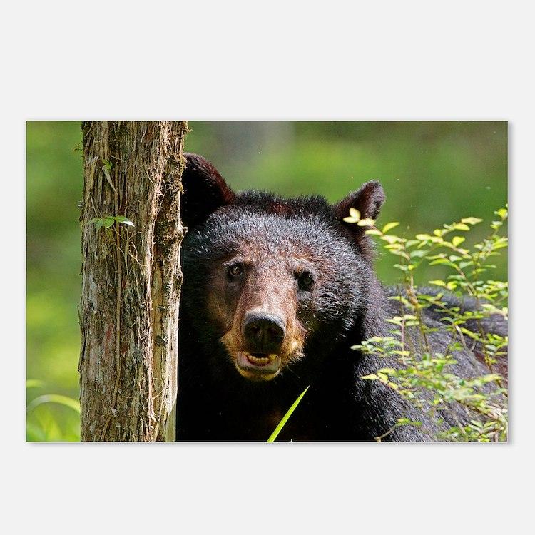 Cute Black bear Postcards (Package of 8)