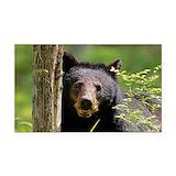 "Black bear 3"" x 5"""