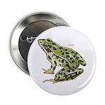 Leopard Frog 2.25