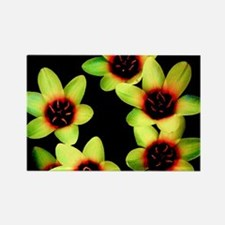 Yellow Flowers on a black Background Magnets