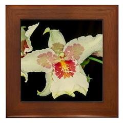 Green White Orchid Framed Tile