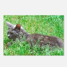 Dilute Tortie Cat Postcards (Package of 8)