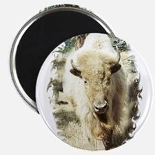 SACRED WHITE BUFFALO Magnets