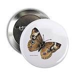 Buckeye Butterfly Button