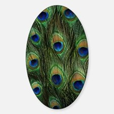 Peacock feathers on a Oval Decal