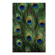 Peacock feathers on a Postcards (Package of 8)