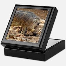 Funny Warthogs Keepsake Box