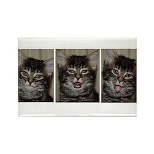 3 Faces Kitten Rectangle Magnet