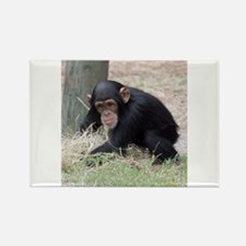 Chimp baby Magnets