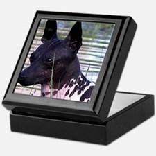 american hairless terrier Keepsake Box