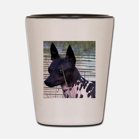 american hairless terrier Shot Glass
