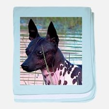 american hairless terrier baby blanket