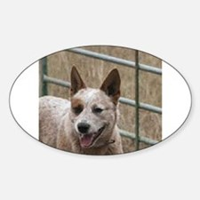 australian cattle dog red Decal