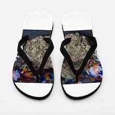 Granddaddy Purple Medical Marijuana Flip Flops