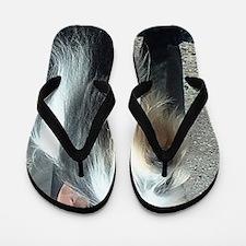 bearded collie Flip Flops