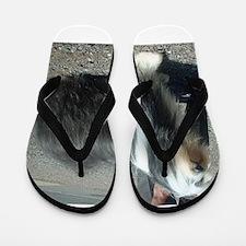 bearded collie full Flip Flops