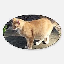 Orange Feral Tabby Cat Decal