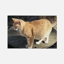 Orange Feral Tabby Cat Magnets