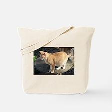 Orange Feral Tabby Cat Tote Bag