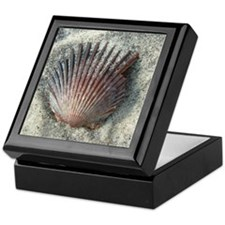 Scallop Shell Keepsake Box
