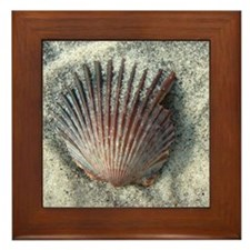 Scallop Shell Framed Tile