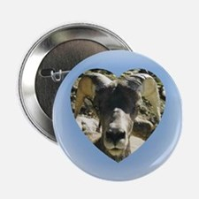 Big Horn Sheep Button