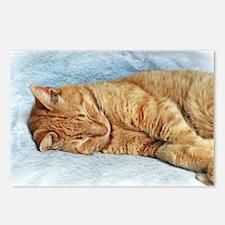 Sleepy Kitty Postcards (Package of 8)