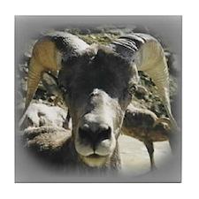 Big Horn Sheep Tile Coaster