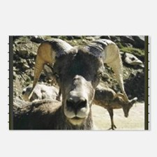 Big Horn Sheep Postcards (Package of 8)