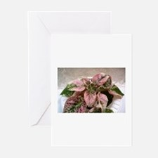 African Violet~Illini Peace Greeting Cards (Pk of