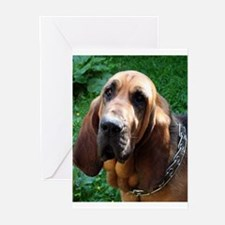 bloodhound Greeting Cards