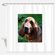 bloodhound Shower Curtain