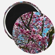 Tulip Tree Magnets