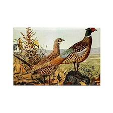 Pheasant Rectangle Magnet (10 pack)