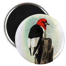 "Woodpecker 2.25"" Magnet (10 pack)"