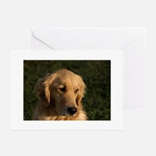 (10) golden retriever head shot Greeting Cards