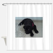 cane corso puppy Shower Curtain
