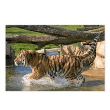 Running tiger Postcards (Package of 8)