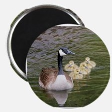 Cute Canadian geese Magnet