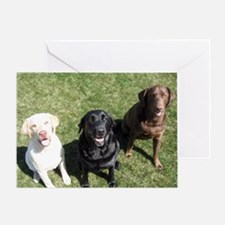 Lab Trio Greeting Card