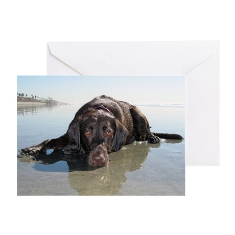 Chocolate Lab KC Greeting Card