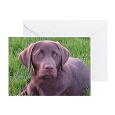 Strong Chocolate Lab Greeting Card