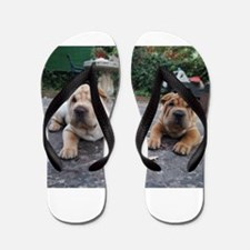 chinese shar pei group Flip Flops