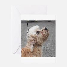 dandie dinmont terrier Greeting Cards