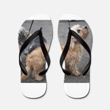 dandie dinmont terrier group Flip Flops