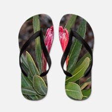 Protea flower with raindrops Flip Flops