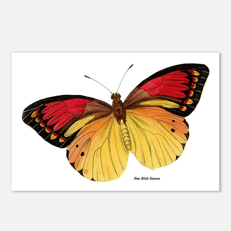 Red Yellow Butterfly Postcards (Package of 8)