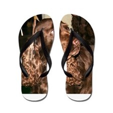 field spaniel Flip Flops
